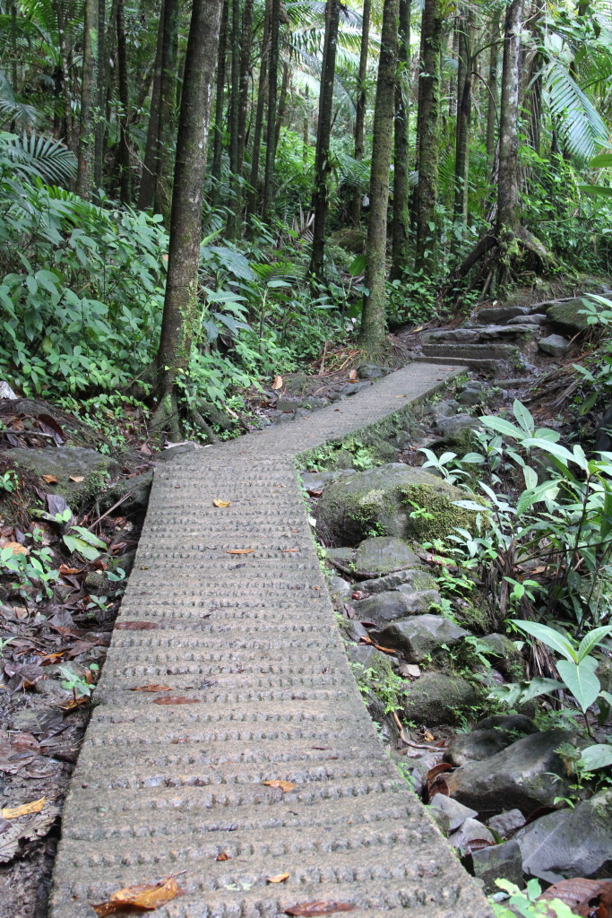 El Yunque - hiking trail